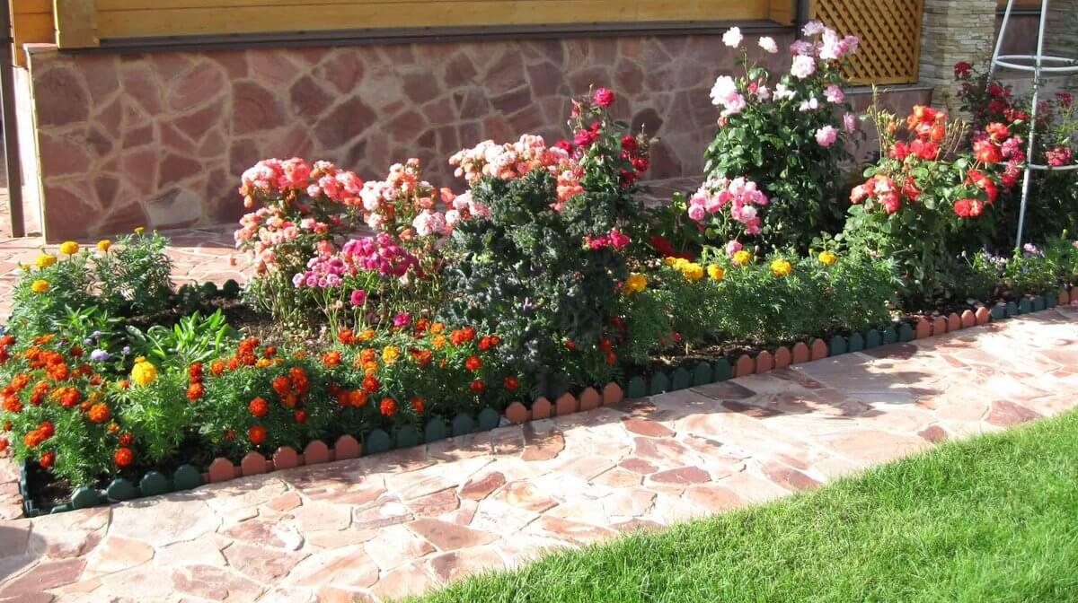палисадник с розами фото фактически