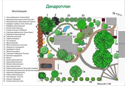 Розробка дендроплана СПб